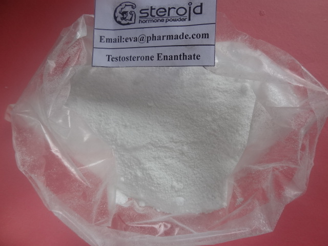 Testosterone Enanthate Primoteston Anabolic Steroids Muscle Building and Bulking Cycle