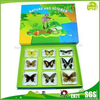 9 Butterfly Set for Biological Learning or Souvenir
