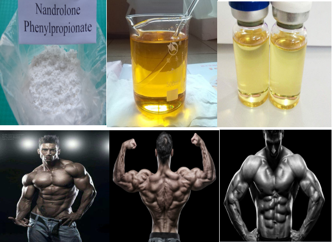 99.0% Purity Nandrolone Phenpropionate/Nandrolone Phenylpropionate/NPP steroid powder