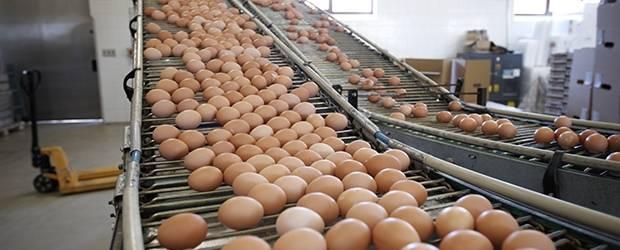 Fresh Brown Table Eggs Chicken Eggs In Bulk