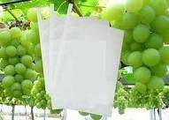 grape growing paper bag, grape protection paper bag, grape packaging paper