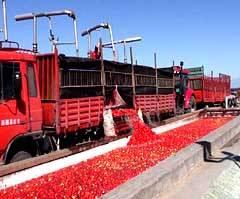 tomato paste machinery
