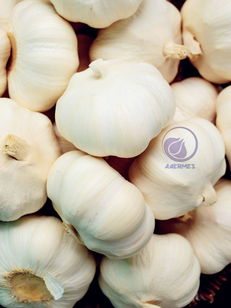 Pizhou Fresh Pure-White / Red Garlic