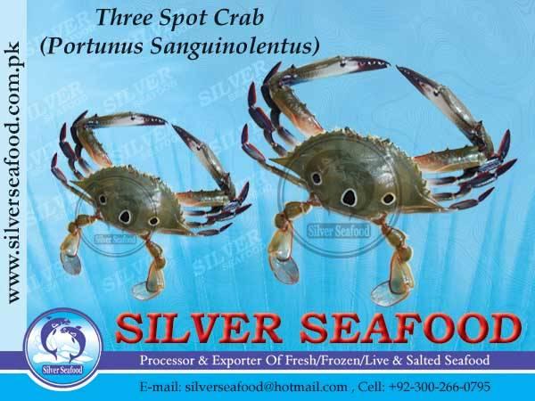 Three spot Crab.Portunus Sanguinolentus