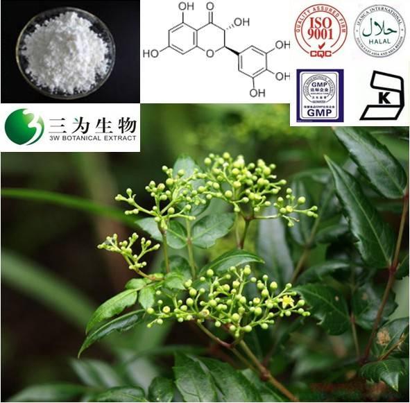 Vine tea extract(sales05@3wbio.com)