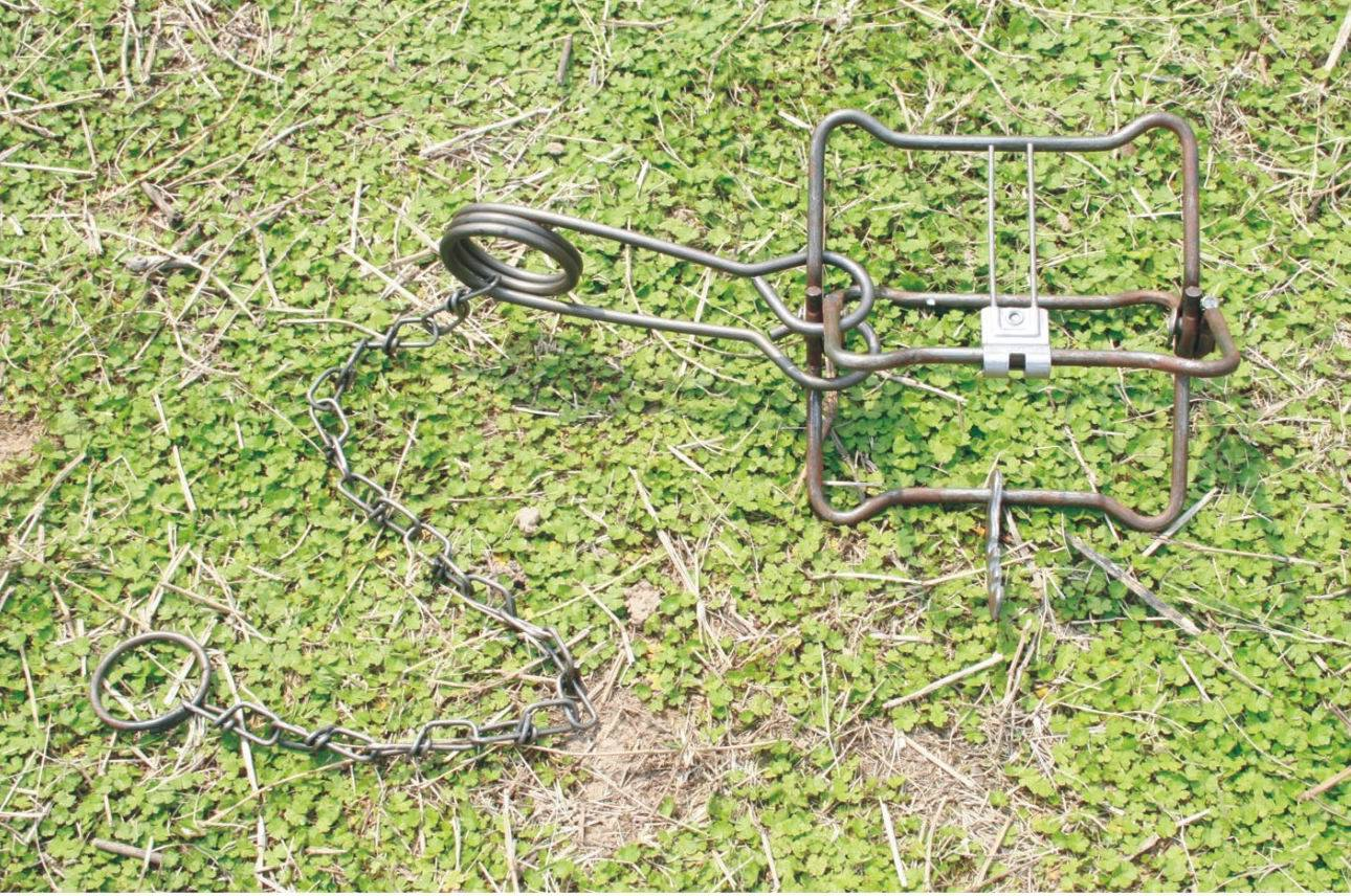 conibear trap different sizes for sale