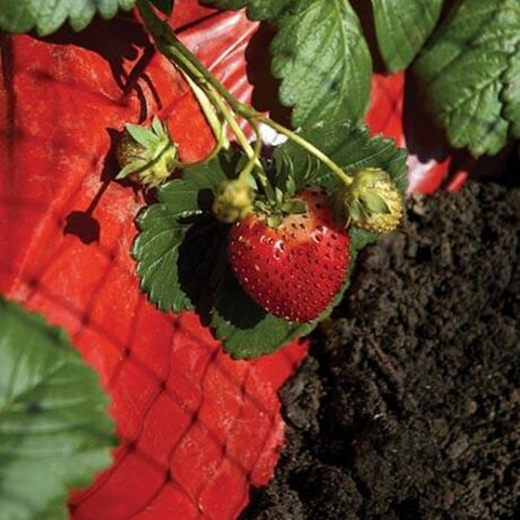 Red pla biodegradable mulching film for strawberry