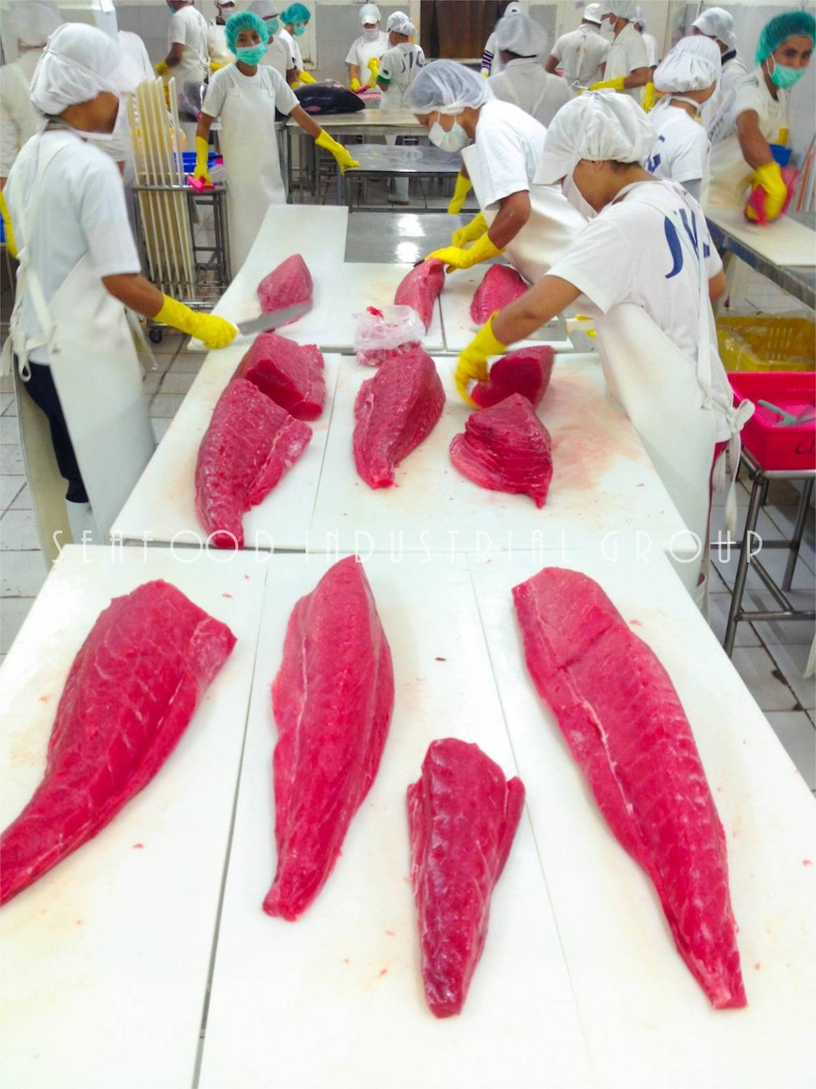 PREMIUM YELLOWFIN TUNA LOINS