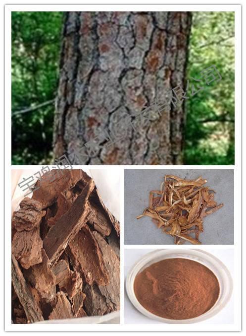 anti-aging pine bark opc 95%