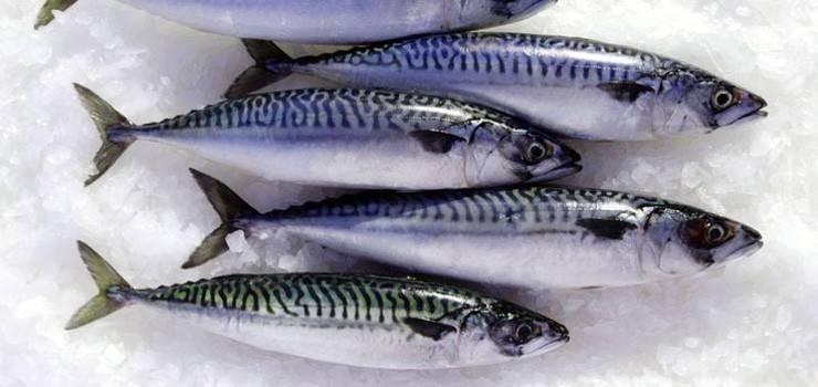 Frozen Pacific Mackerel