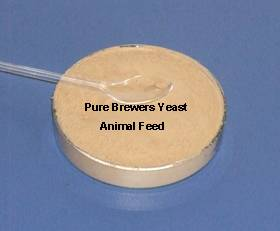 Brewers Yeast for animal feed