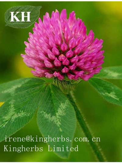 Red Clover Extract; Isoflavons 20%, 40%, 80% HPLC