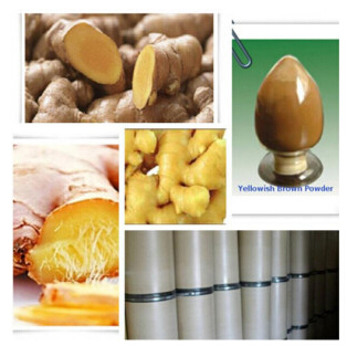 Ginger Root Powder Fresh Ginger Extract CAS: 84696-15-1