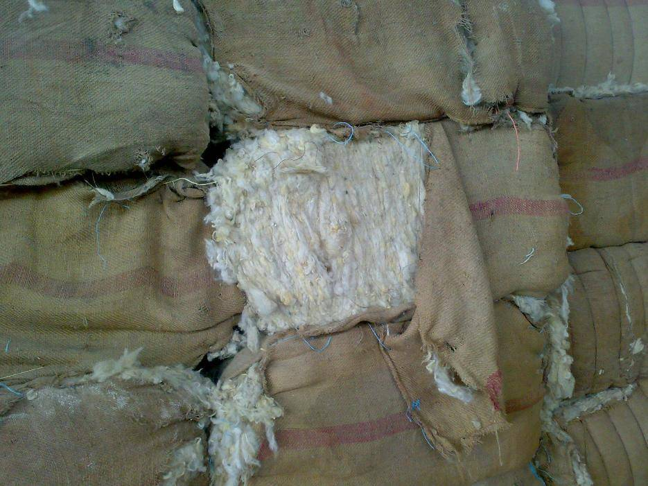 selling all types of wool for carpet grade