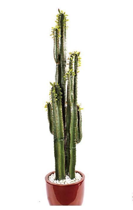 specialy design bonsai for home decoration artificial cactus