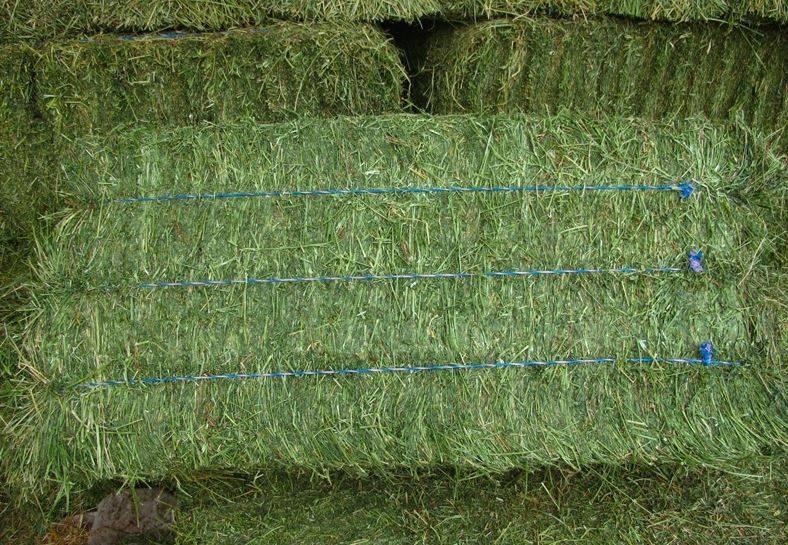 Trefoil ( Alfalfa ) (shorbagy foods)