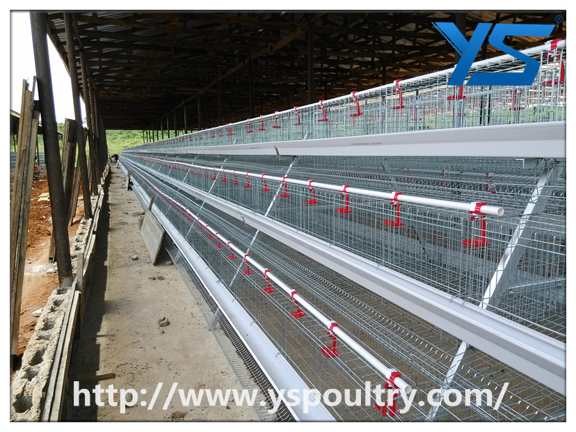 A Frame Automatic Layer Chicken Cage Supplier