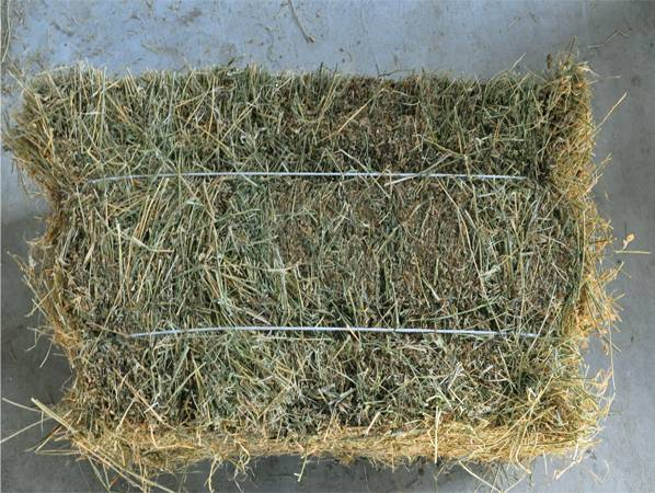 export alfalfa hay
