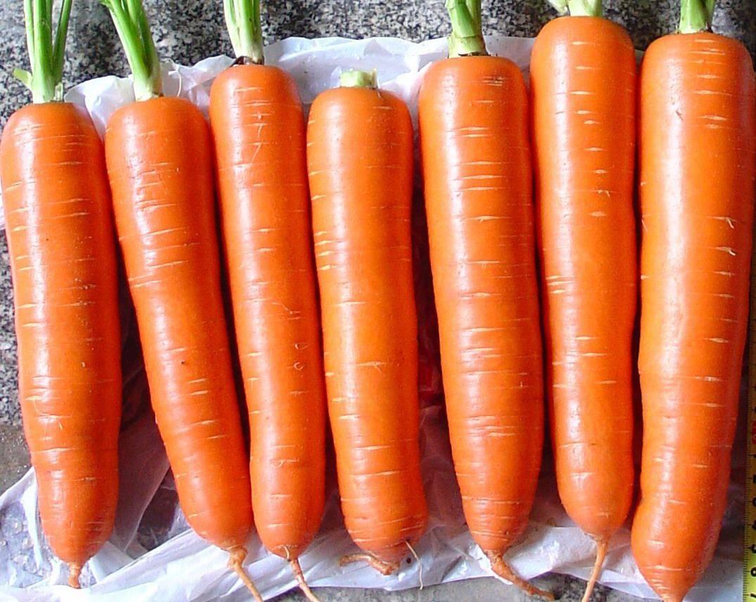 Fresh carrots company Carrot Farm organic carrot red carrot