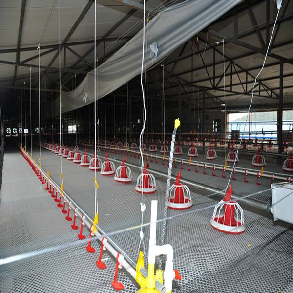 2015 Automatic Pan Poultry Feeding System