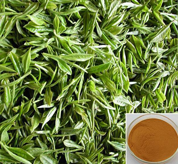 Green tea extract 80%