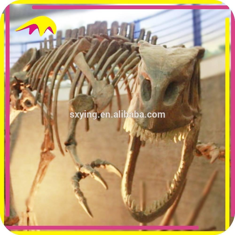 KANO2006 Handmade Lfe Size Skeleton Exhibition Dinosaur