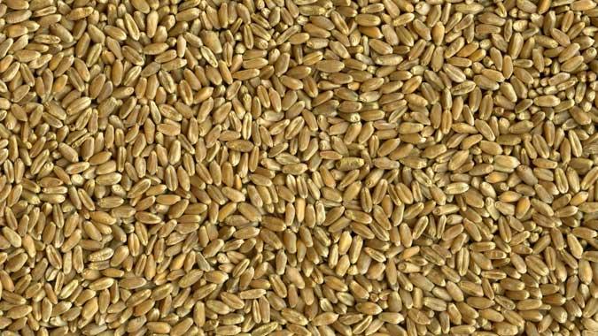 USA Hard Red Wheat
