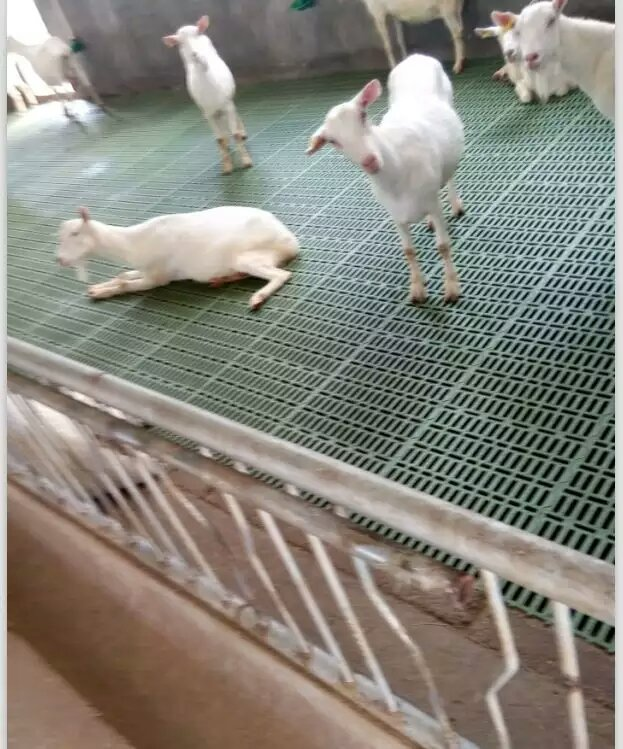 goat farming plastic slat floor