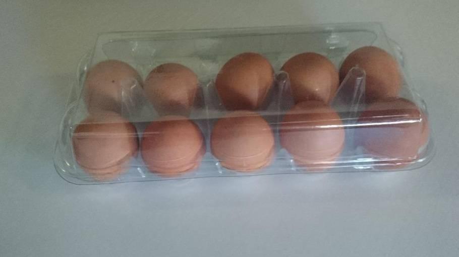 10x1 Egg tray