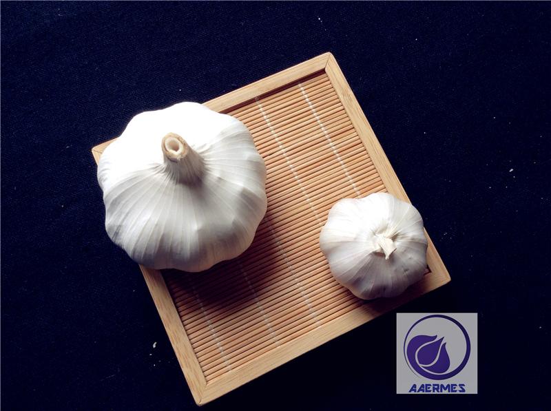 Fresh Pure-White /Normal White Garlic From China