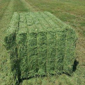 T&H Alfalfa Hay Animal Feeding High Quality