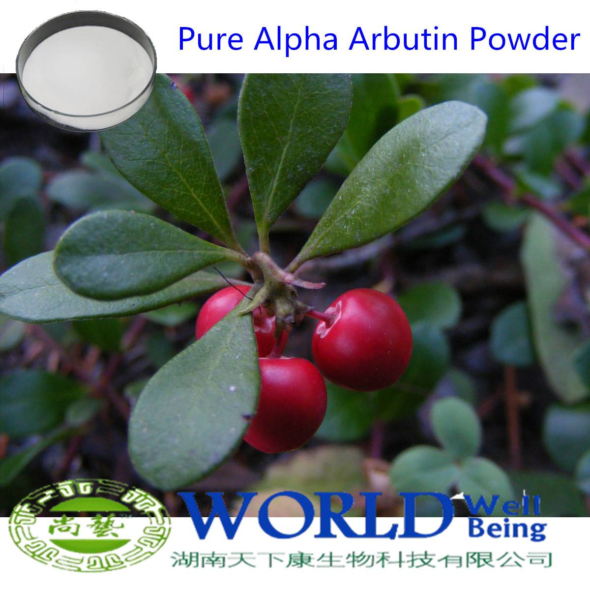Bearberry Extract Alpha-Arbutin Extract Powder 98% Skin Lightening /Alpha Arbutin / Beta Arbutin Pow