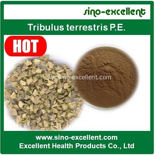 Tribulus terrestris P.E
