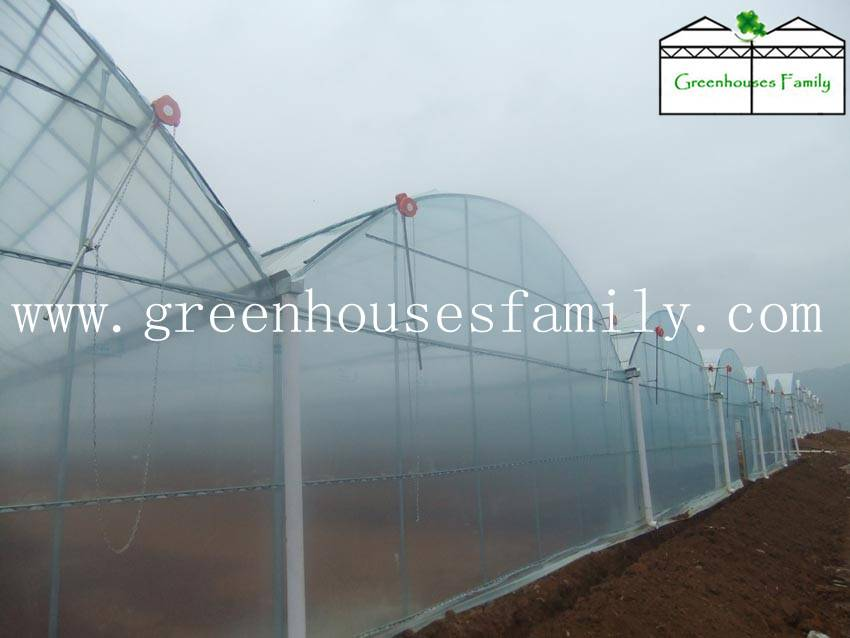 Commercial Gutter Connected Greenhouses from China