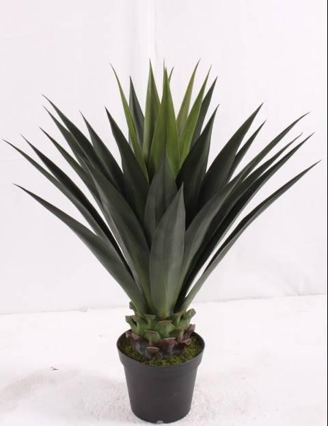 Sleek realistic artificial Folium Agaves America nae, Golden margined Century Plant Leaf.