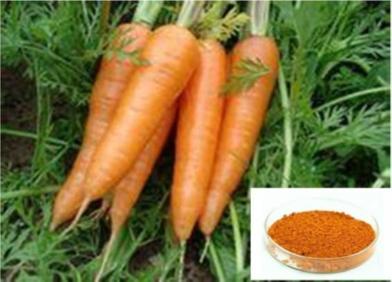 Plant Extract Beta Carotene 1%, 10%, 20%, 30%