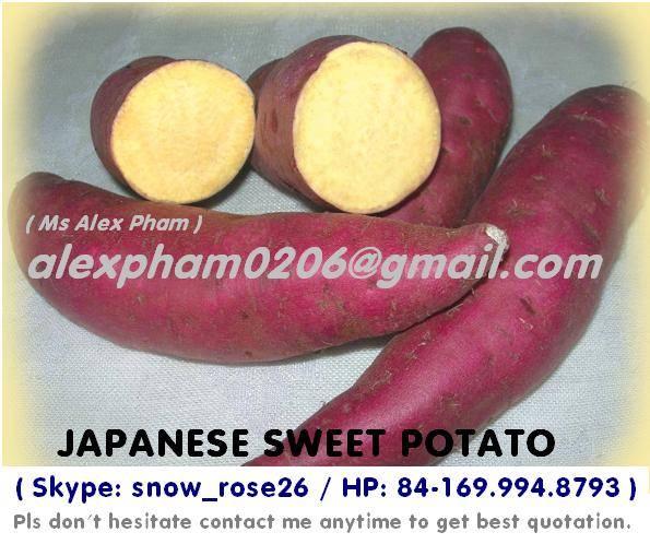 fresh sweet potato/ purple sweet potato/ frozen slices sweet potato/ sweet potato starch/ batata