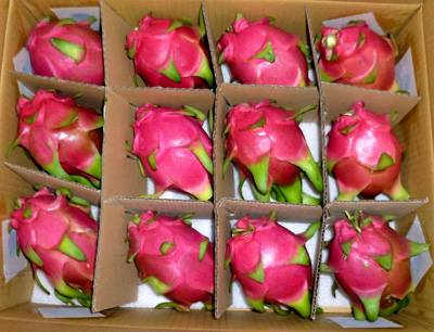Fresh Dragon Fruit,