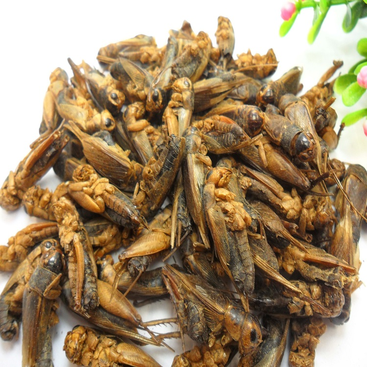 High Quality Dried Grasshopper