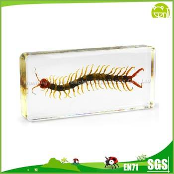 Real Centipede Specimen Biological Model Teaching Aids