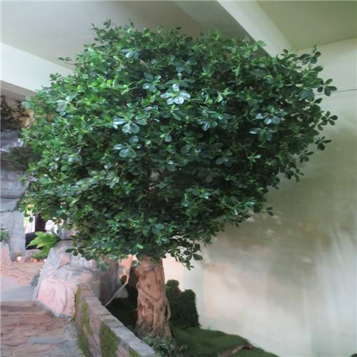 artificial  Polyscias tree(better choice for outdoor decotion)