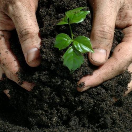 4mm Pellets Organic Fertilizer