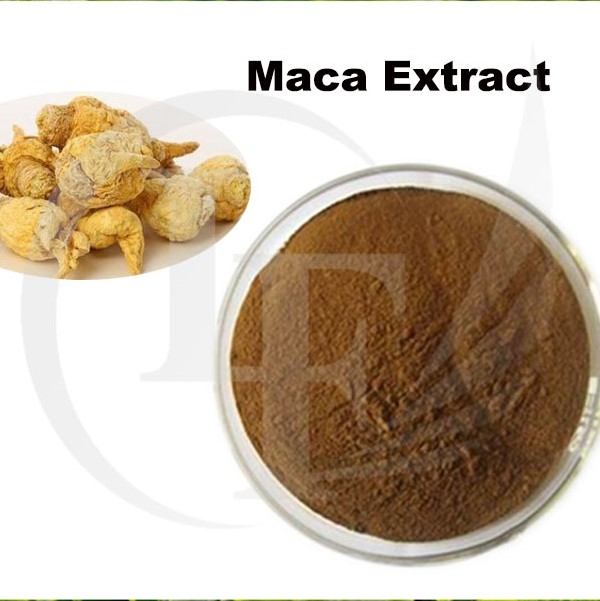 ISO Manufacturer Supply Maca Root Extract