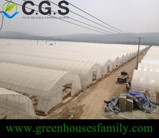 Single High Tunnel Greenhouse on Sale