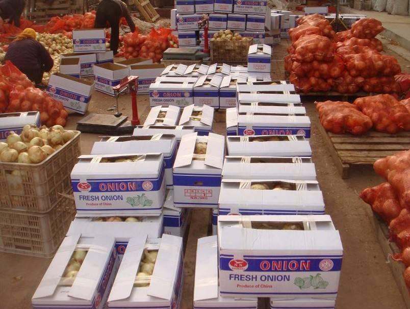 yellow onion supplier high quliaty 20kg mesh bag
