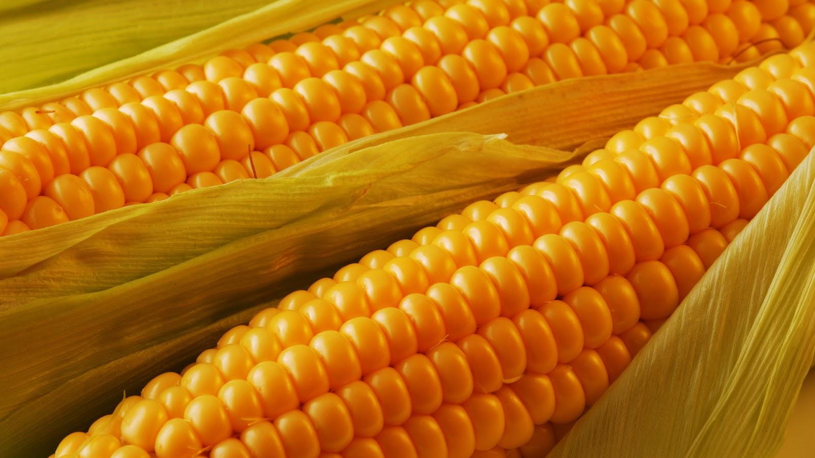 Yellow Corn (Russia Origin)