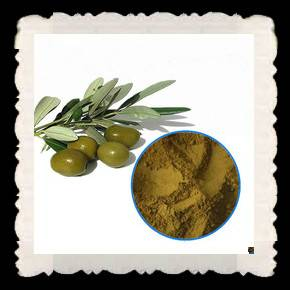 High quality olive leaf extract 6% hplc