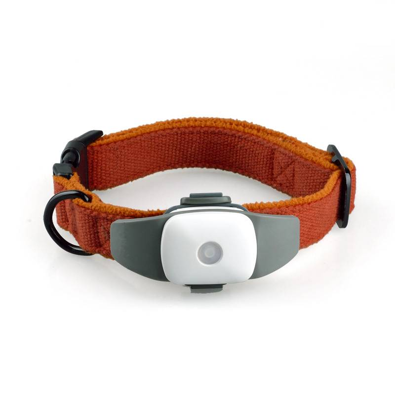 pet gps collar