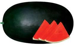 Hybrid Vegetable Seed/Watermelon Seed-FST 9700