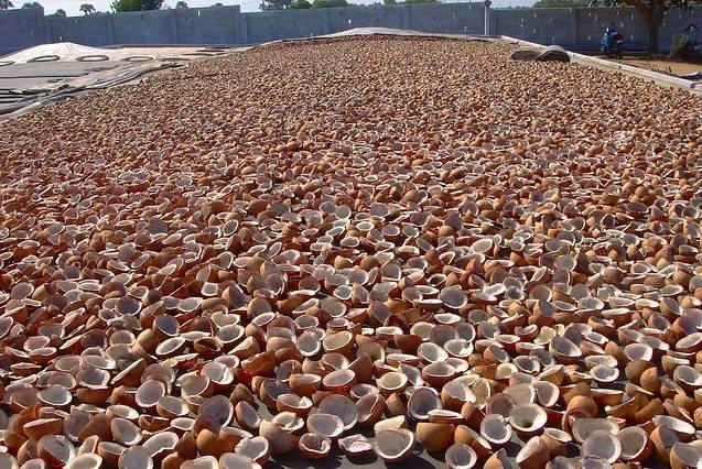 Coconut Copra Dried